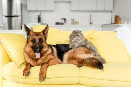 yellow, objects, colorful, bright, cute, friendship - B253328544