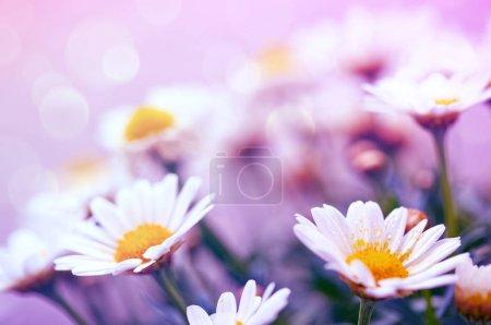 yellow white background macro closeup season