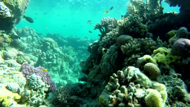 colorful nature water animal sea tropical