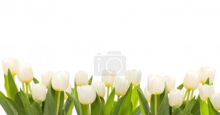 Media-id B6408831
